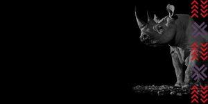 Tusk-Rhino-Trail-2018-Precious-Credit-David-Yarrow-BG